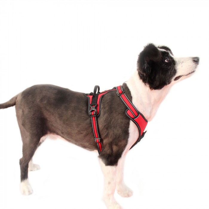 DOCO Vertex reflective braces for dogs